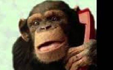 mono llamando por teléfono