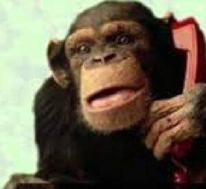 mono hablando por telefono